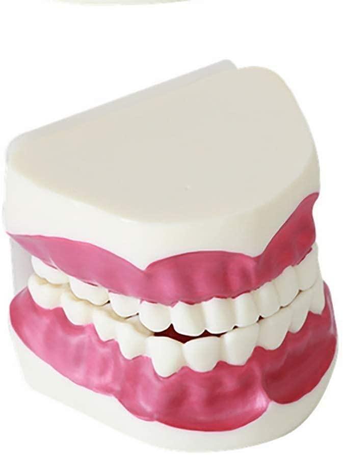 YAOJING Teeth Model,Children Brushing Teeth Model,28 Teeth Dental Teeth Care Model 9.19