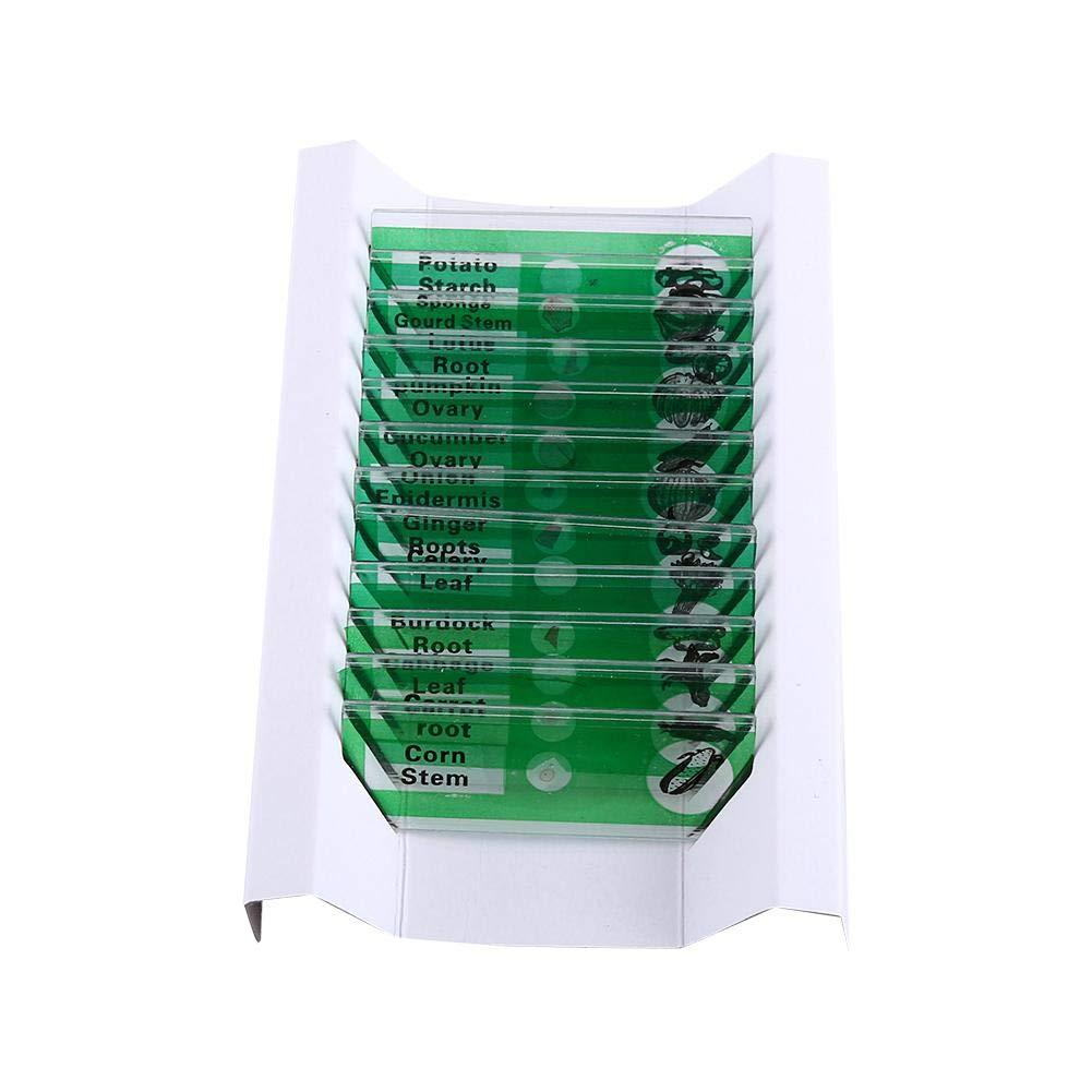Prepared Microscope Slides,12pcs Plastic Prepared Microscope Slides Animals Insects Flowers Plants (Green)