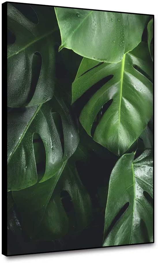 shensu Framed Canvas Wall Art Prints Botanical Posters Dewy Green Monstera Leaves Natural Tropical Plant White Background Wall Decor for Living Room Bedroom Bathroom Kitchen Office Home 12X16inch