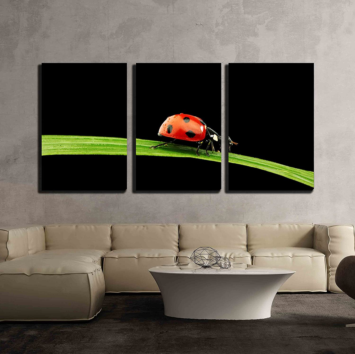 wall26 - 3 Piece Canvas Wall Art - Ladybug on Grass Isolated Black Background - Modern Home Art Stretched and Framed Ready to Hang - 24