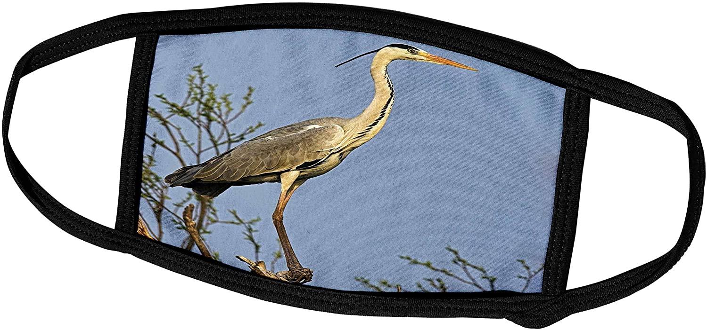 3dRose Grey Heron Bird, Danube Delta, Romania - EU24 MZW0016 - Martin. - Face Covers (fc_138476_2)
