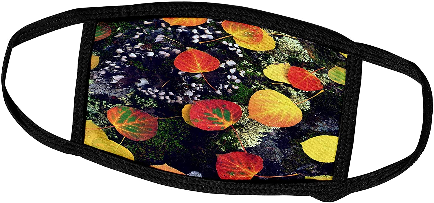 3dRose USA, Colorado, Aspen Leaves on a Rock in The Rocky Mountains. - Face Covers (fc_208769_2)