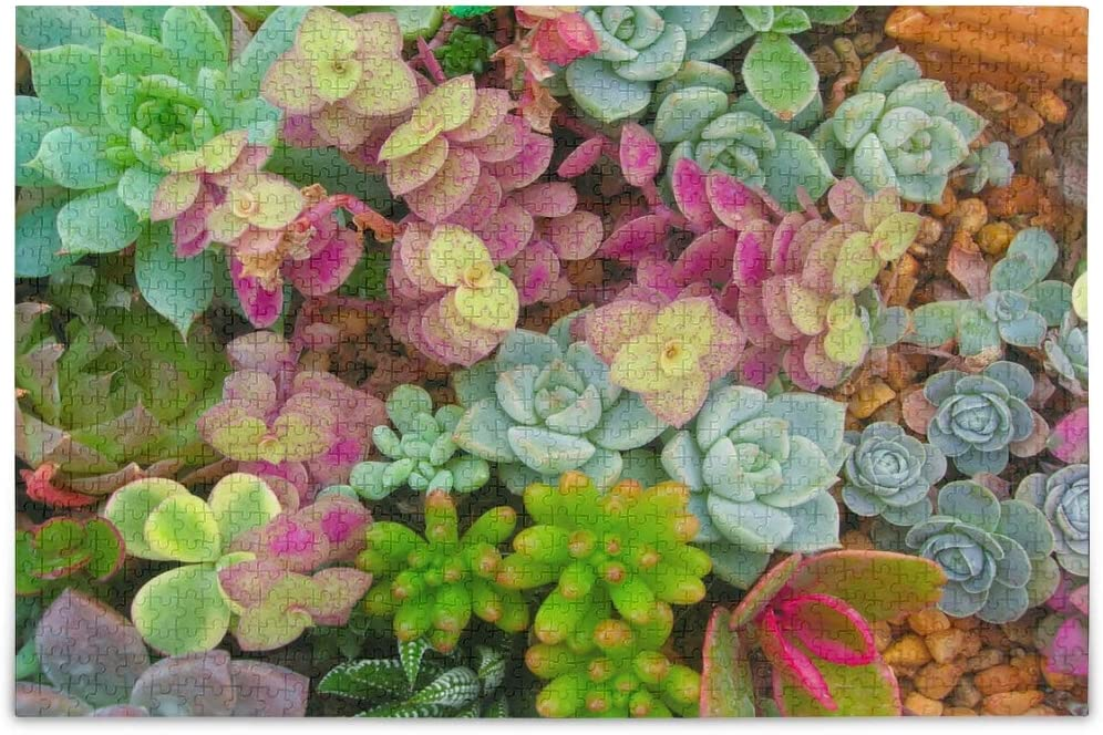 Sweet Succulent Plants Games 500 Pieces Jigsaw Puzzles for Adults Children Gift