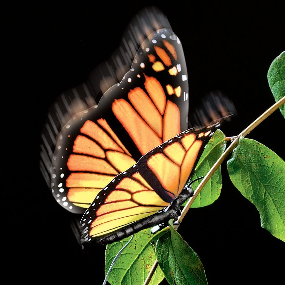Active Aliforms Monarch Moving Butterfly