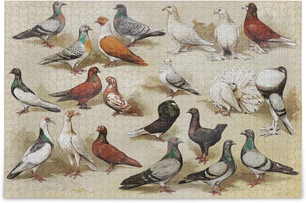 Vvfelixl - Birds Collage - 500 Pieces Jigsaw Puzzle - 20.5