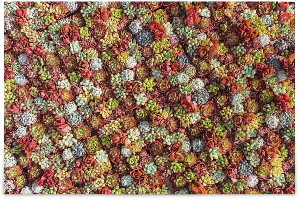 500 Piece Jigsaw Puzzle - (Colorful Succulent Plants in Pots), Jigsaw Puzzles 500 Pieces for Adults, Kids, Educational Intellectual Decompressing Toys & Fun Games for Kids, Adults