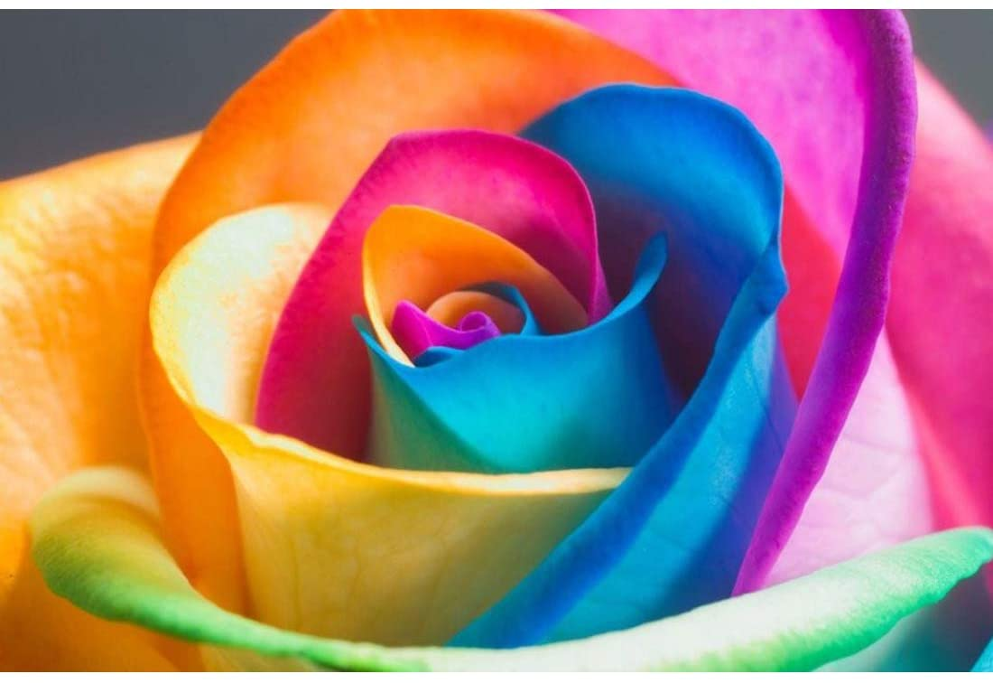 Rainbow Rose 5D Diamond Painting Kits Full Drill DIY Diamond Painting by Number Kits Crystal Rhinestone Embroidery Cross Stitch Arts Craft for Home Wall Decor
