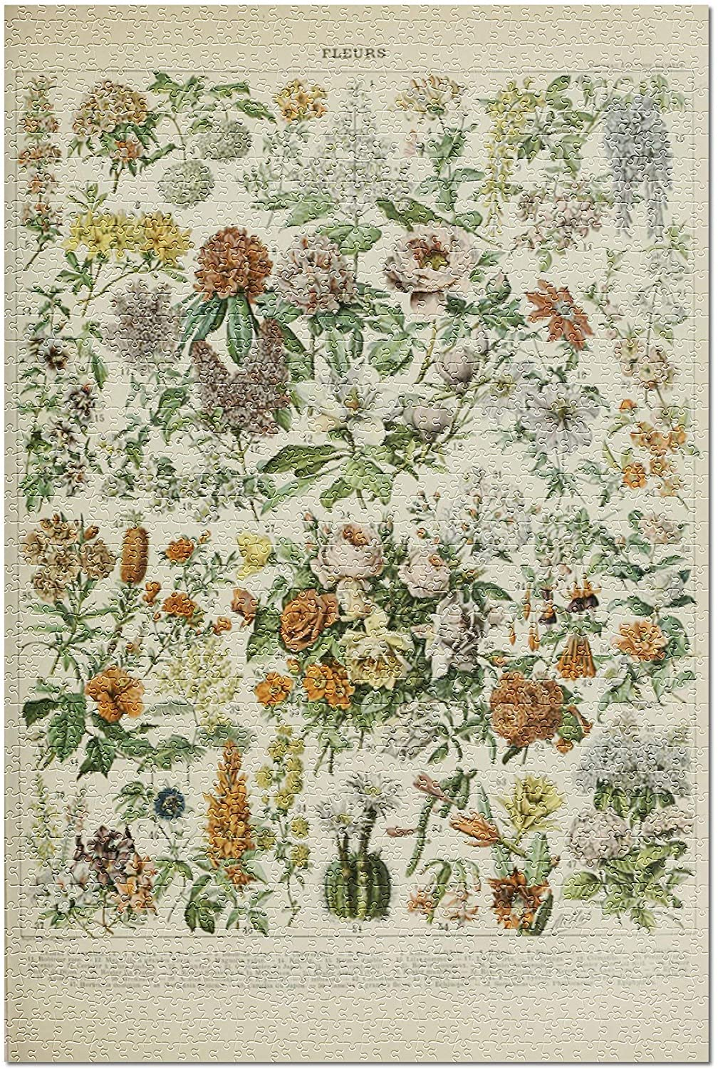 Assorted Flowers - C - Vintage Bookplate - Adolphe Millot Artwork (Premium 1000 Piece Jigsaw Puzzle for Adults, 19x27)