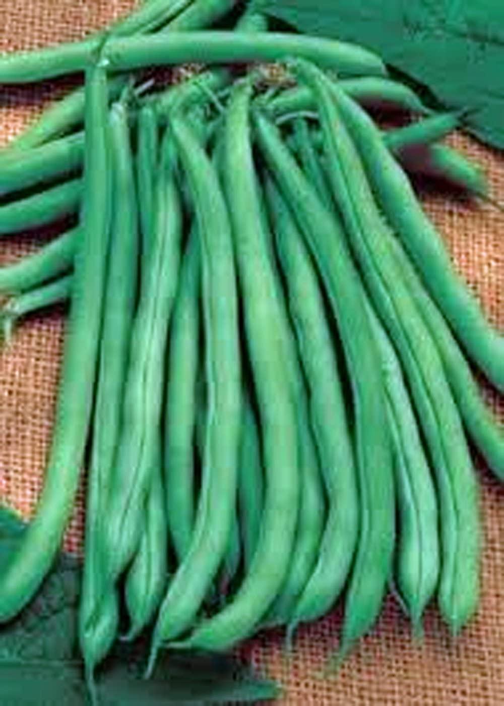 Green Bean, Blue Lake, Heirloom,500+ Seeds, Non-GMO, Tasty N Healty Beans
