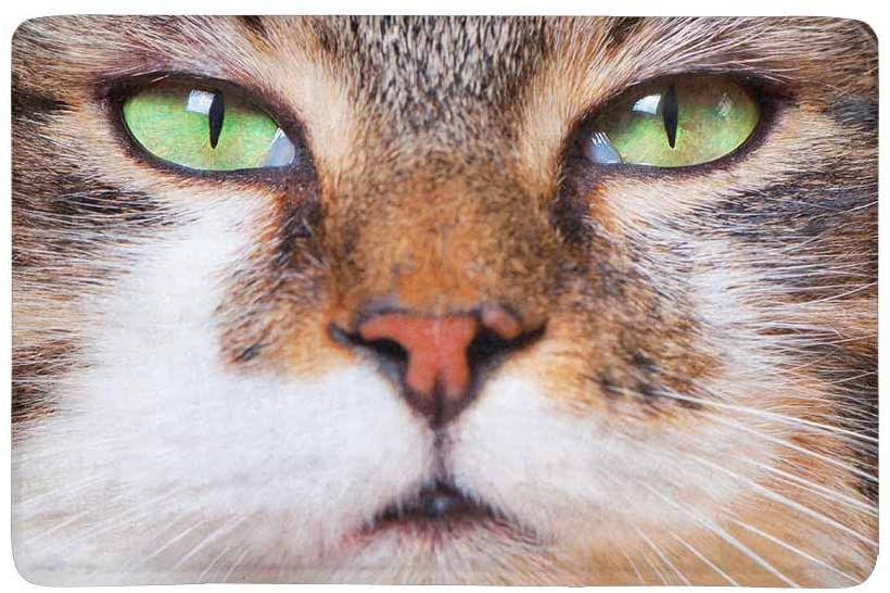 InterestPrint Close Up of Tabby Cat's Face Funny Animal Doormat Non-Slip Indoor and Outdoor Door Mat Rug Home Decor, Entrance Rug Floor Mats Rubber Backing, 23.6