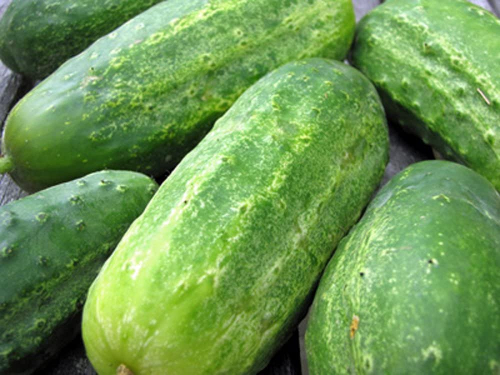 Cucumber, Boston Pickling, Heirloom, 500 Seeds, Great for Pickling