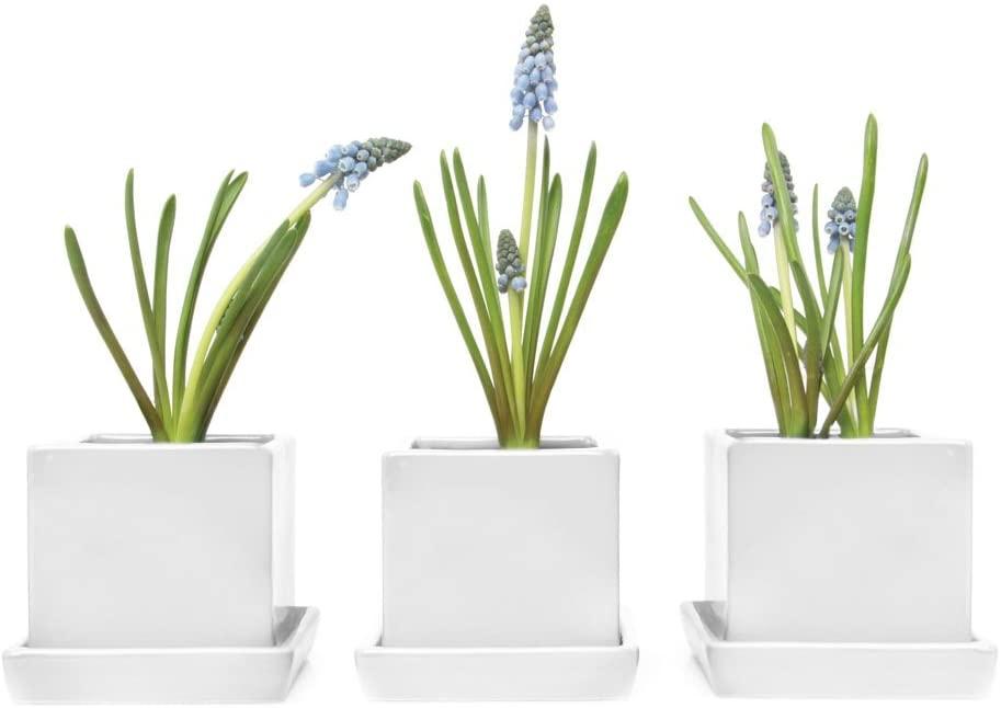 Chive - 3 Piece Set White Square Succulent Cactus Planter Pot, 3 Inch Ceramic Flower Plant Container, Drainage Hole/Saucer, Mini Pot Indoor/Outdoor Garden