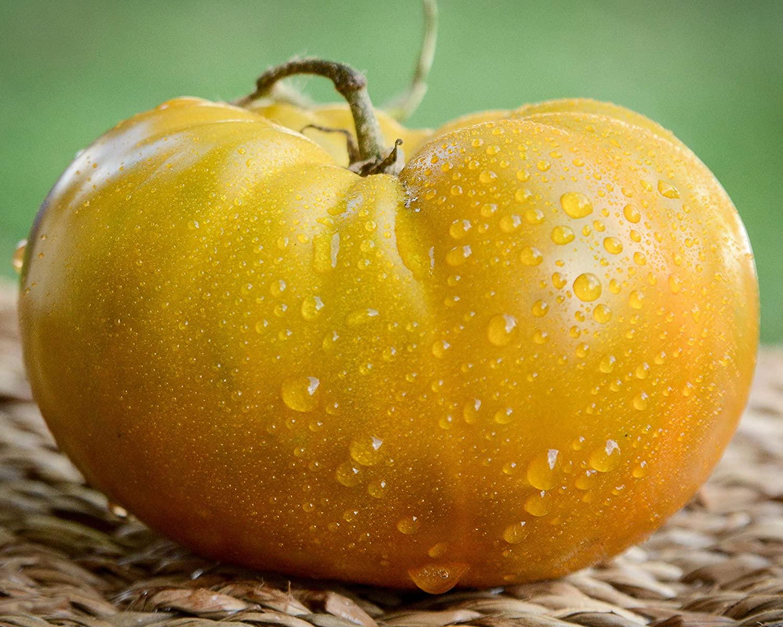 Thorburn's Terra Cotta Terracotta Heirloom Tomato Premium Seed Packet