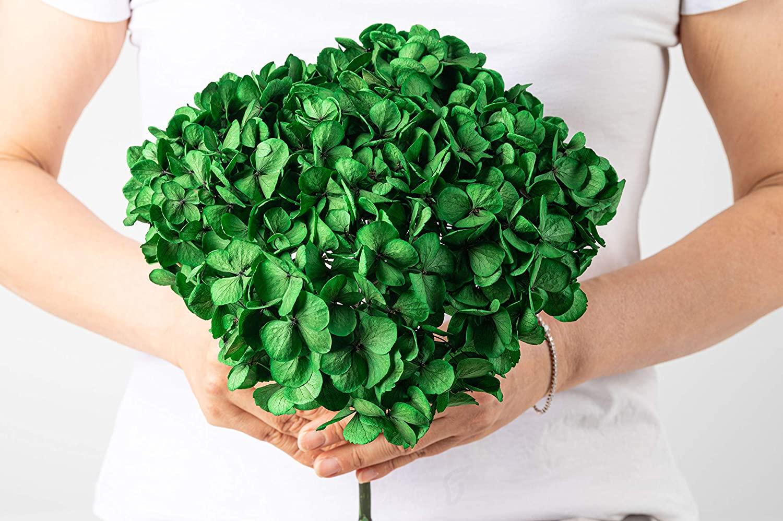 Green Hydrangea Colombian Super Jumbo Preserved Real Flower (Green Mischief)