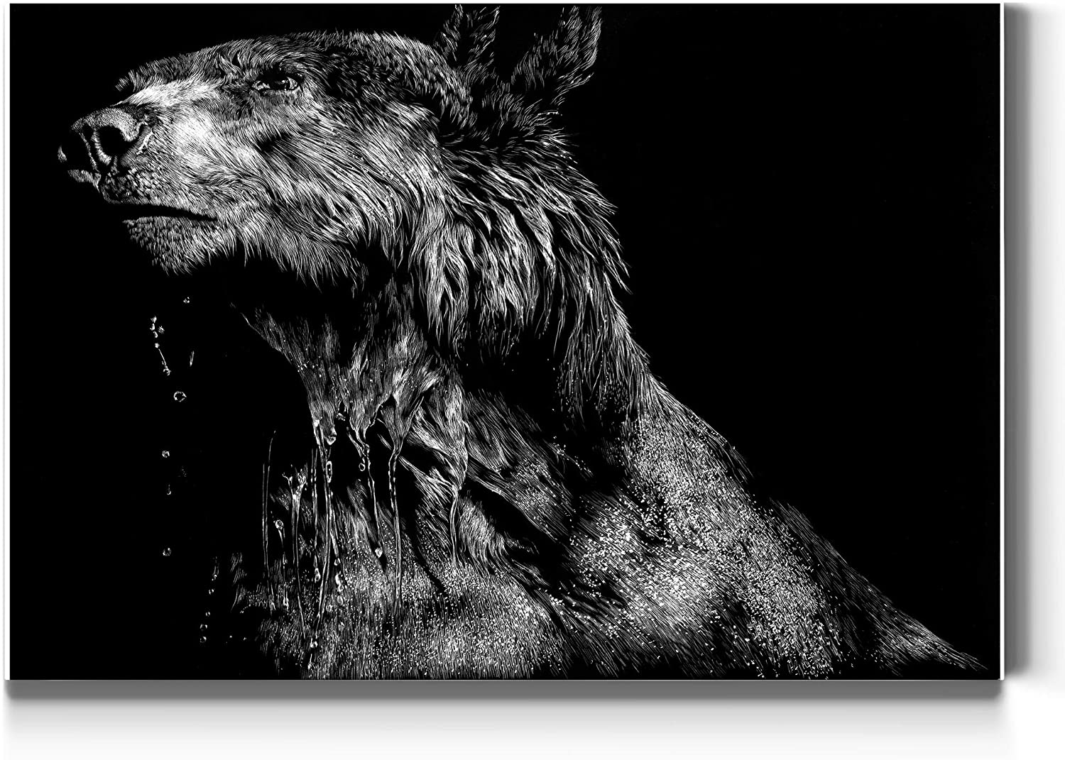 Renditions Gallery Wild Scratchboard (4) Wall Art, Ursa Major, She Bear (Female) Detailed Black and White, Premium Gallery Wrapped Canvas Decor, Ready to Hang, 12 In H x 18 In W, Made in America Print