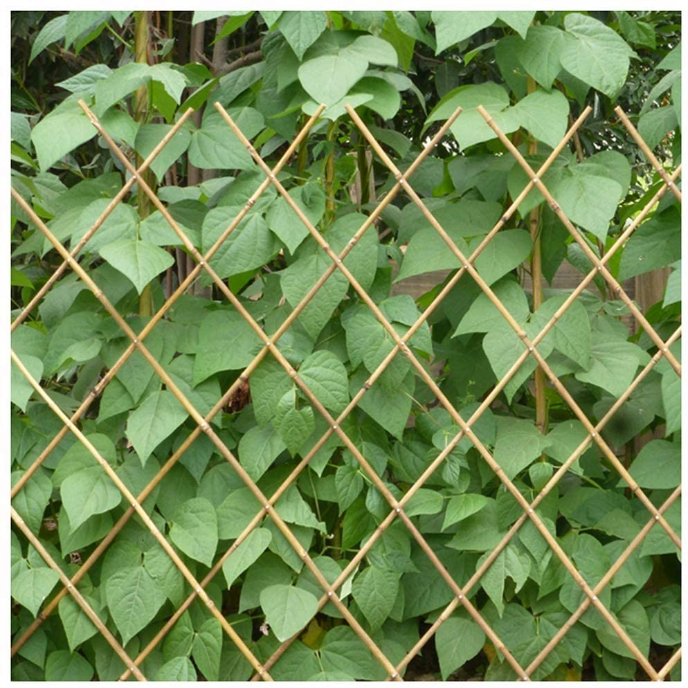 ZENGAI Garden Fence Trellis Fence Bamboo Fence Fence Climbing Vine Stretch Outdoor Patio Farm Guardrail Bamboo Pull The Net Rope Sold Separately (Size : Network100X150CM)