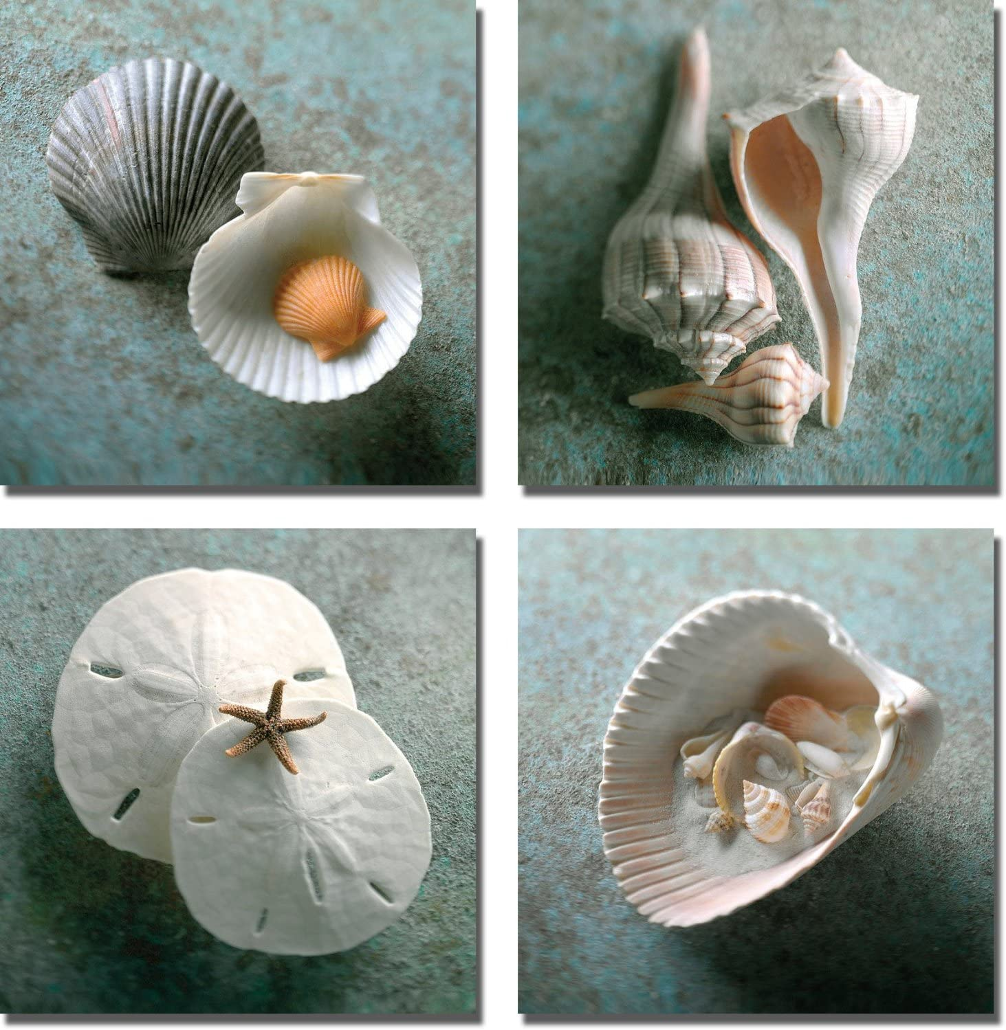 Scallops, Whelks, Sand Dollars, Shells in Shell by WANS 4-pc Premium Gallery-Wrapped Canvas Giclee Art Set (Ready-to-Hang)