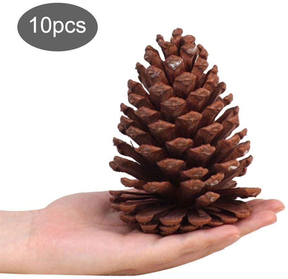 10 PineCones 4