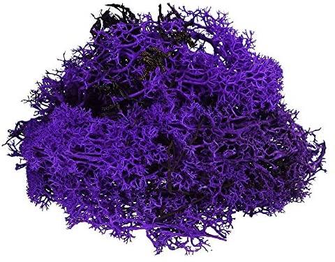 Purple Reindeer Moss Preserved Floral Moss (Pack of 2.5oz Purple)