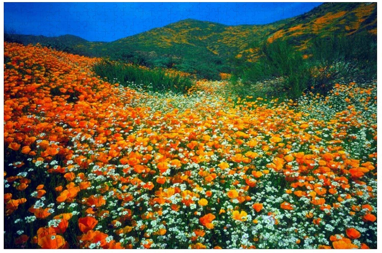 California Poppies and Popcorn Wildflowers Puzzles for Adults, 500 Piece Kids Jigsaw Puzzles Game Toys Gift for Children Boys and Girls, 15