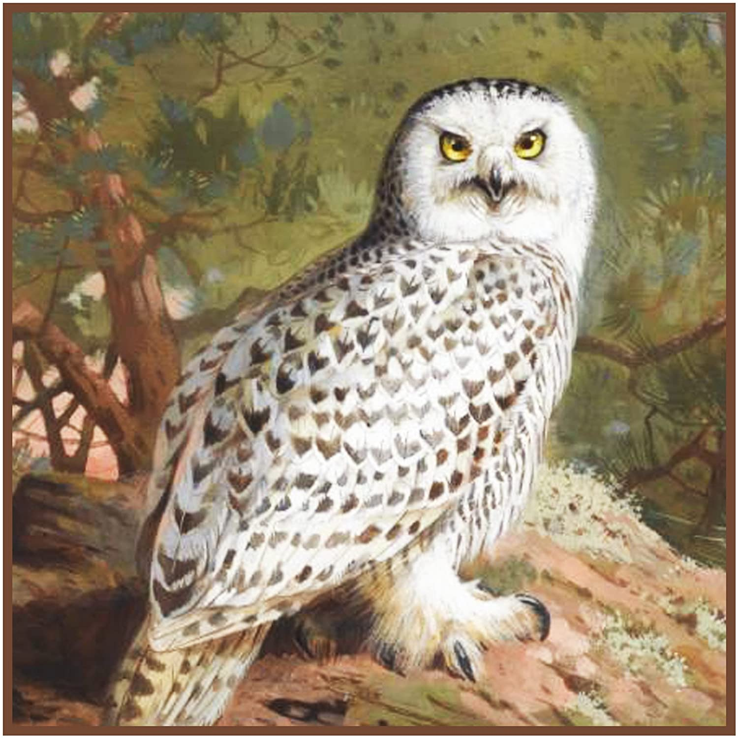 Orenco Originals Snowy Owl by Archibald Thorburn Counted Cross Stitch Pattern