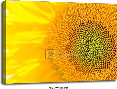 Barewalls Sunflower Close Up Gallery Wrapped Canvas Art (30in. x 40in.)