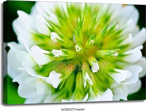 Flower Macro Gallery Wrapped Canvas Art (30in. x 40in.)