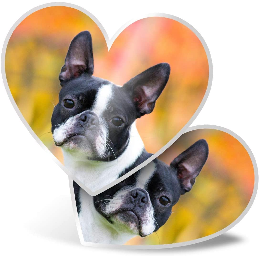 Awesome 2 x Heart Stickers 7.5 cm - Cute Boston Terrier Puppy Dog Fun Decals for Laptops,Tablets,Luggage,Scrap Booking,Fridges,Cool Gift #16611