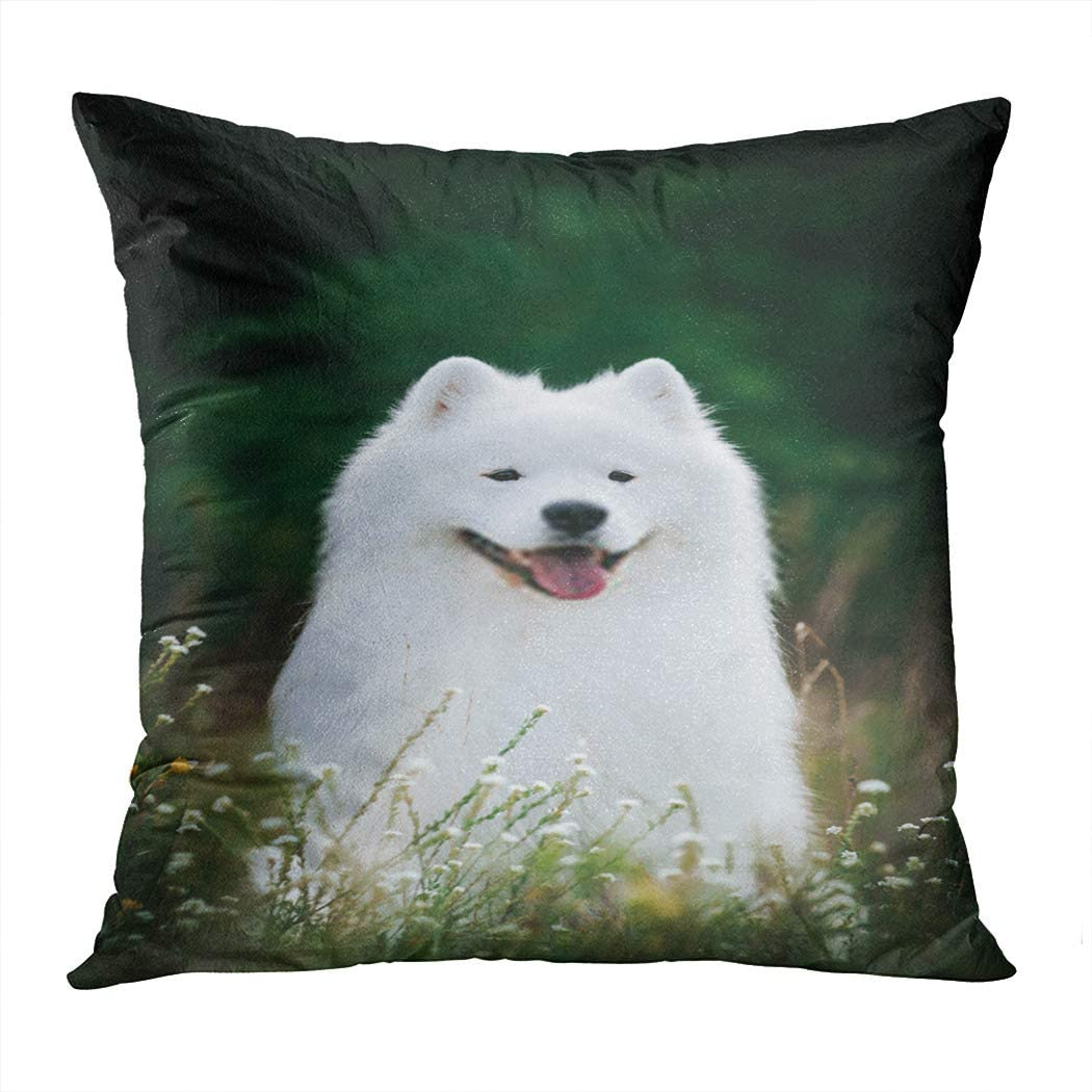Zomike Throw Pillow Cover Square 178 x 16 Inch Samoyed Dog Posing Park Husky Animal Happy Cushion Home Decor Sofa Bedroom Office Polyester Pillowcase