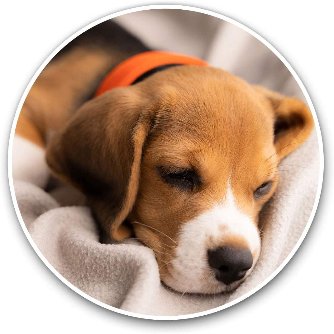 Awesome Vinyl Stickers (Set of 2) 10cm - Cute Beagle Puppy Sleeping Dog Fun Decals for Laptops,Tablets,Luggage,Scrap Booking,Fridges,Cool Gift #21411