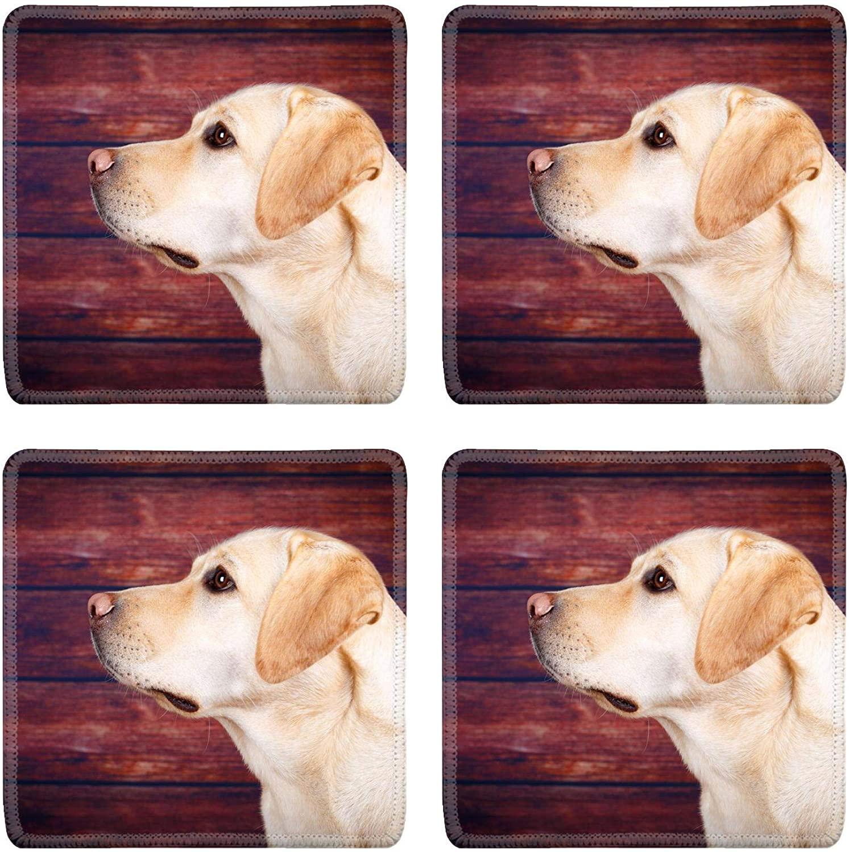 MSD Drink Coasters 4 Piece Set Image ID: labrador retriever dog Image 33648518 Stain Resistance Collector K