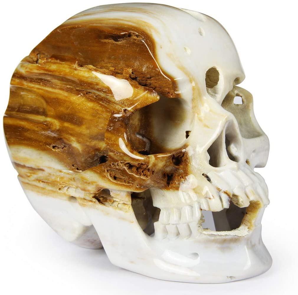 Skullis The Crystal Skull of Resolution - Petrified Wood Carved Crystal Skull Sculpture, Super Realistic, Hand Carved Gemstone Fine Art Sculpture, Reiki Healing Stone Statue.