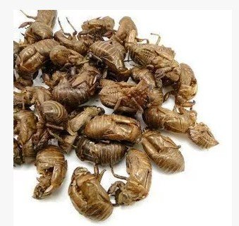 Ase-us The Chinese herbal medicine chantui cicada cicada cicada shell and pure natural shedding quality assurance 500 grams batch of mail package