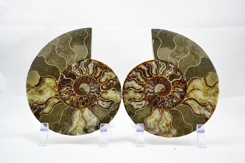 e3657 Cut Split Pair Ammonite Deep Crystal Cavity XXLARGE 6.75