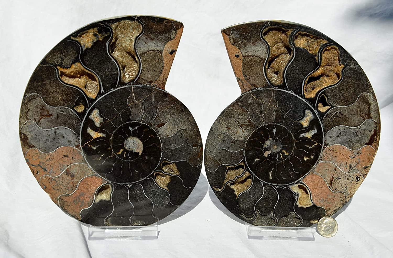 e2424x RARE 1 in 1000 BLACK Ammonite Pair Deep Crystals Xlarge 7.3