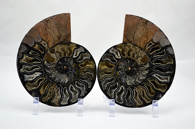 e3453x RARE 1 in 100 BLACK Ammonite Pair Deep Crystals xxlarge 7.0