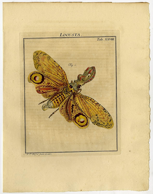 Antique Print-CICADA-DICTYOPHARIDAE-FRONS-28-Rosel van Rosenhof-1765