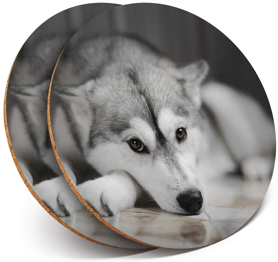 Great Coasters (Set of 2) Round with - Awesome Siberian Husky Dog Animals Drink Glossy Coasters/Tabletop Protection for Any Table Type #8636