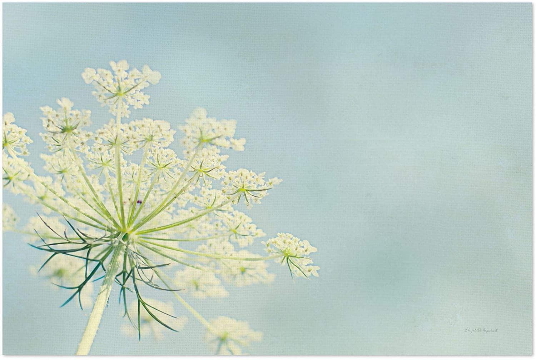 Noir Gallery Floral Queen Nature Botanical Photo 11 x 14 Unframed Art Print/Poster