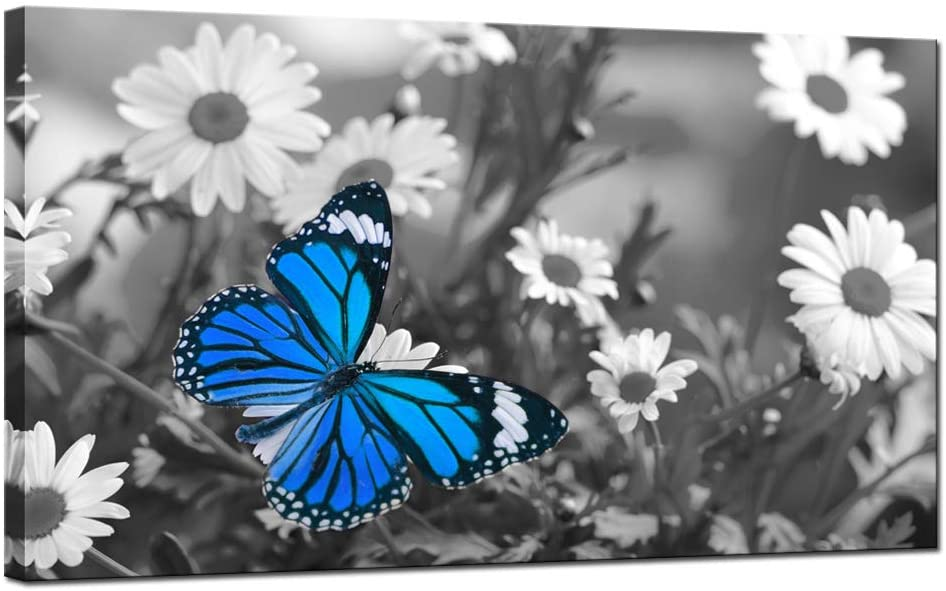 sechars Modern Canvas Wall Art Blue Butterfly on Daisy Flower Picture Canvas Painting Black and White Floral Landscape Artwork for Living Room Bedroom Wall Decoration Gallery Wrap Ready to Hang