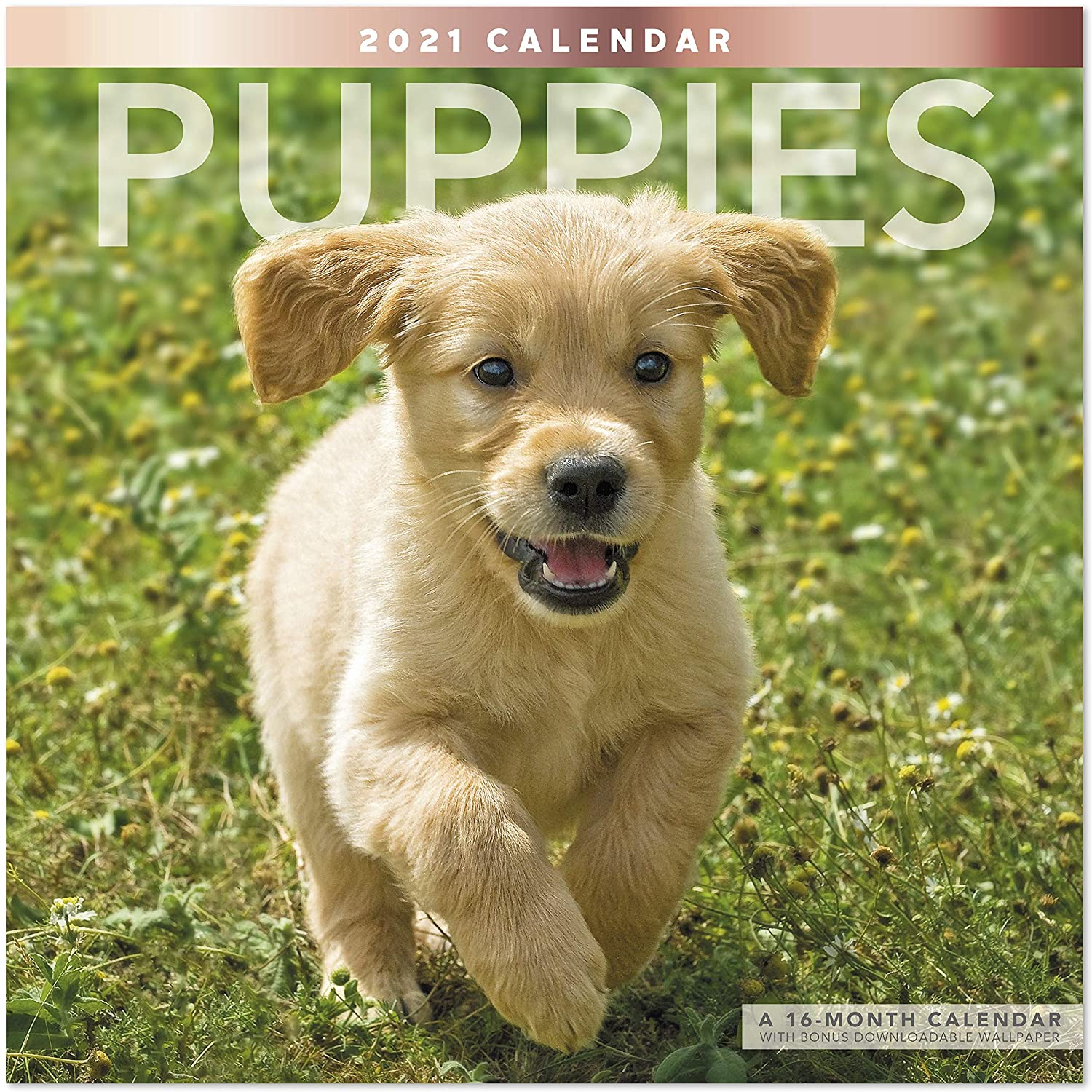 Mead 2021 Puppies Wall Calendar, 12