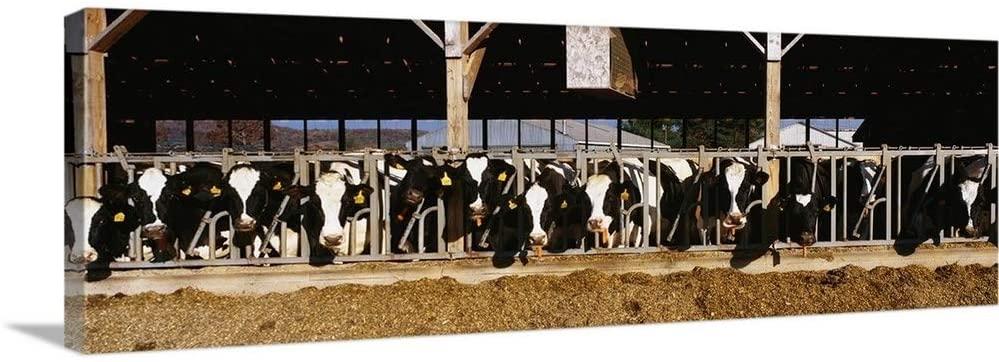 Dairy Cows Canvas Wall Art Print, 36x12x1.25