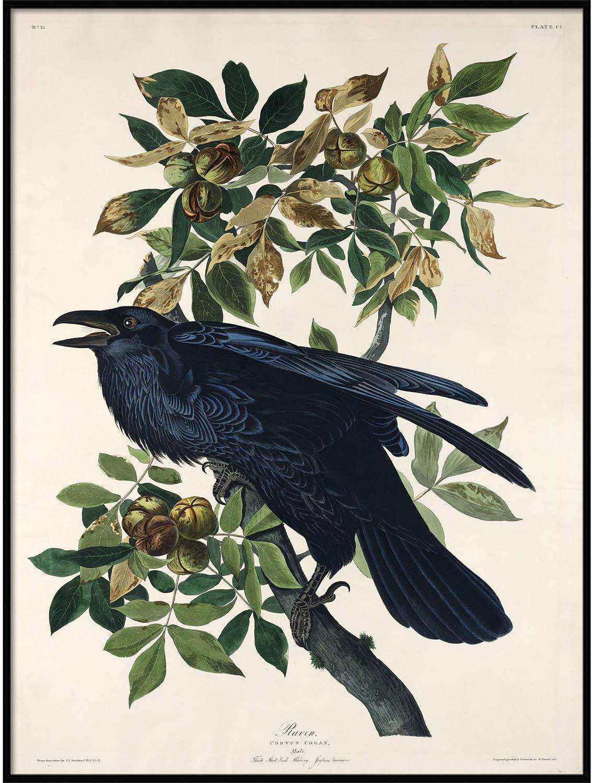 Raven Print, Antique Bird Painting, Vintage Drawing Poster Wall Art Decor, Black Raven, Bird Nature Print, Bird Lovers Gift | C424 16x20
