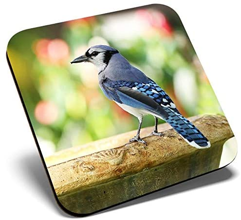 Great Single Coaster Square - Blue Jay Bird North America USA |Glossy Quality Coasters | Tabletop Protection for Any Table Type #21257
