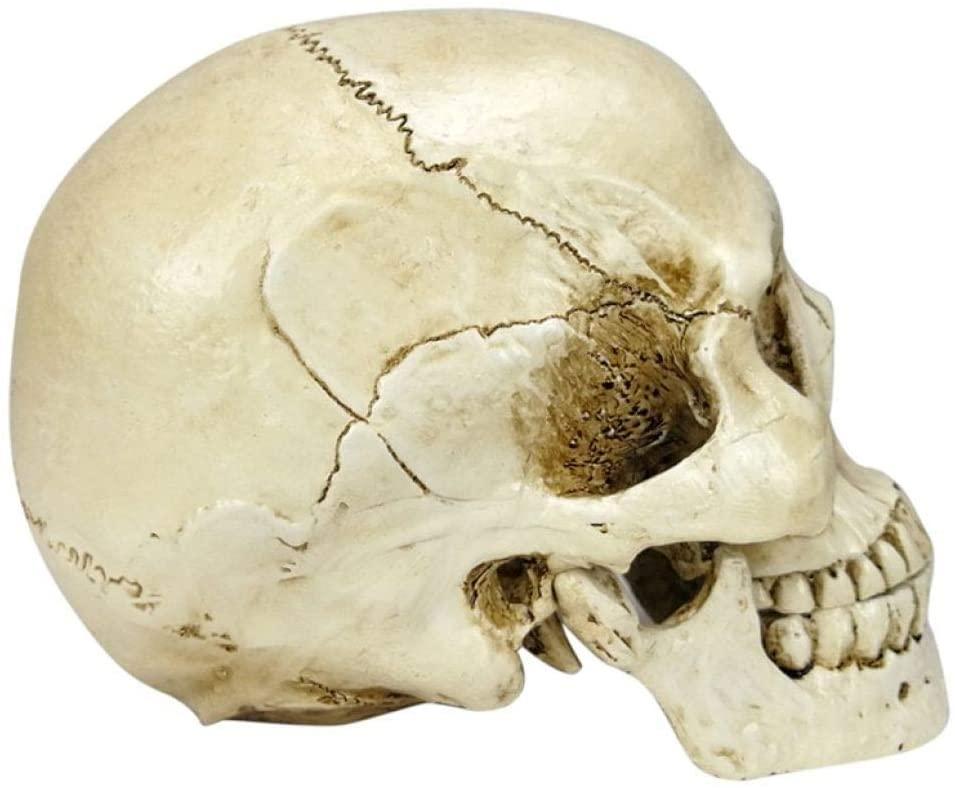 UKURO 1:1 Skull Human Head Statue Resin Lifesize Skeleton Sculpture Creative Home Living Room Decoration Craft