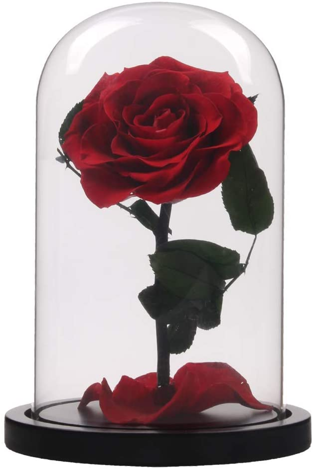 Siyaglass Enchanted Beauty The Beast Rose, Preserved Fresh Flower Real Rose Fallen Petals in Glass Dome on Wooden Base Home Decor Party Wedding Birthday Crafts Gifts