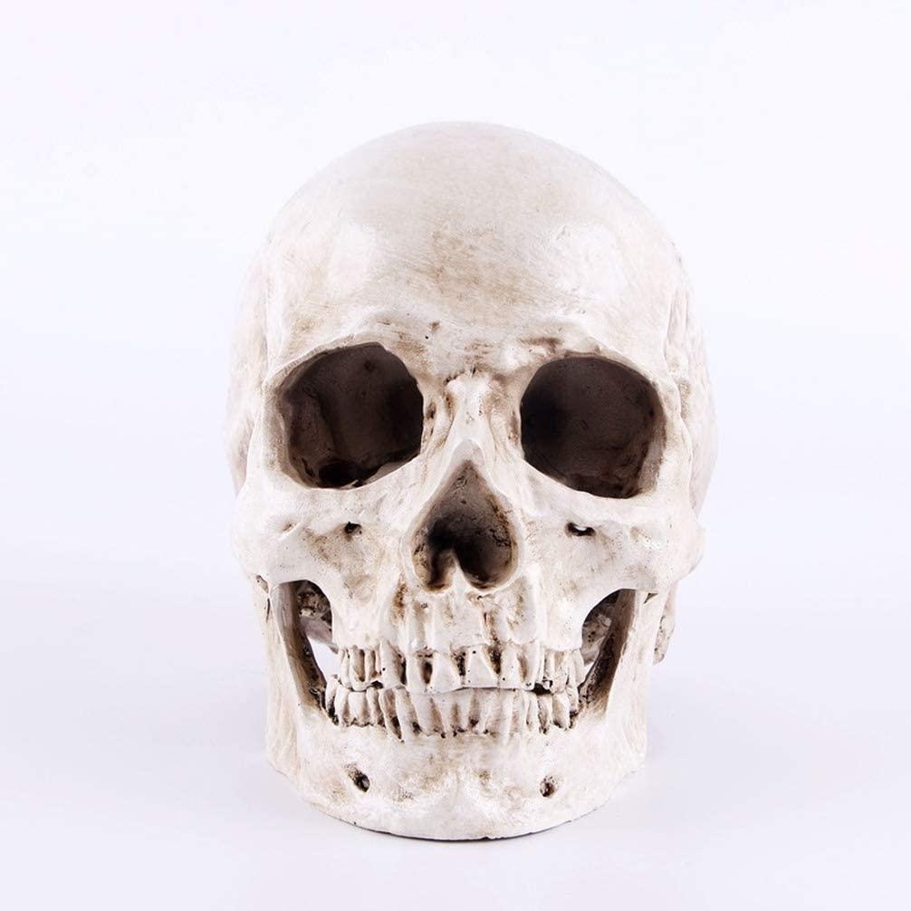 YITOG Resin Skull Mold Skull Statues Decorative Harnpan Sculptures People Skull Model Halloween Party Decor Lifesize 1:1 (A)