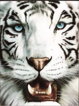 3D Art Posters. Lenticular Art and Changing Pictures. Framed and Unframed Options and Many Choices. Includes 2 Pictures.