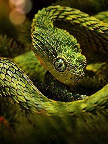 HommomH Snake Blanket 50