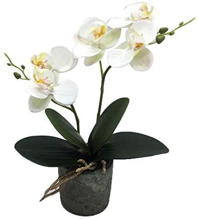 KINBEDY Artificial Bonsai Silk Orchids Phalaenopsis with Vase Home Office Decoration Party Wedding Decor,White.